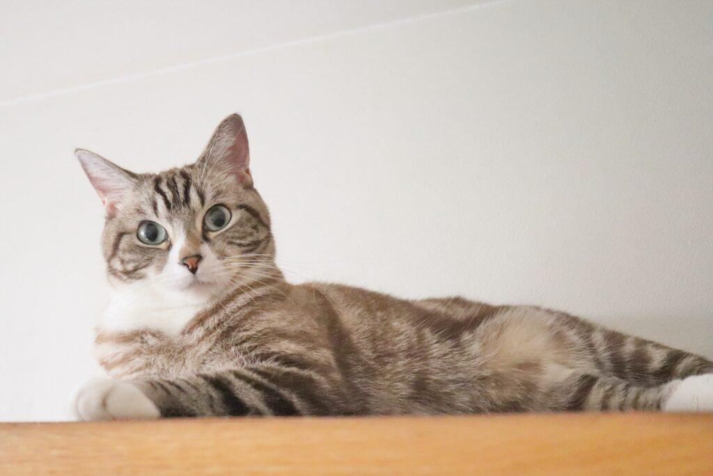 【花療法Feles】ペットのセッション